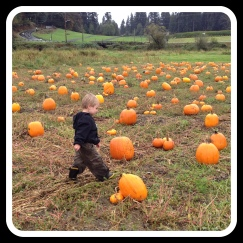 Lincoln pumpkin patch