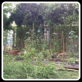 bamboo before