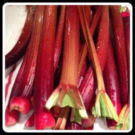 rhubarb long stalks